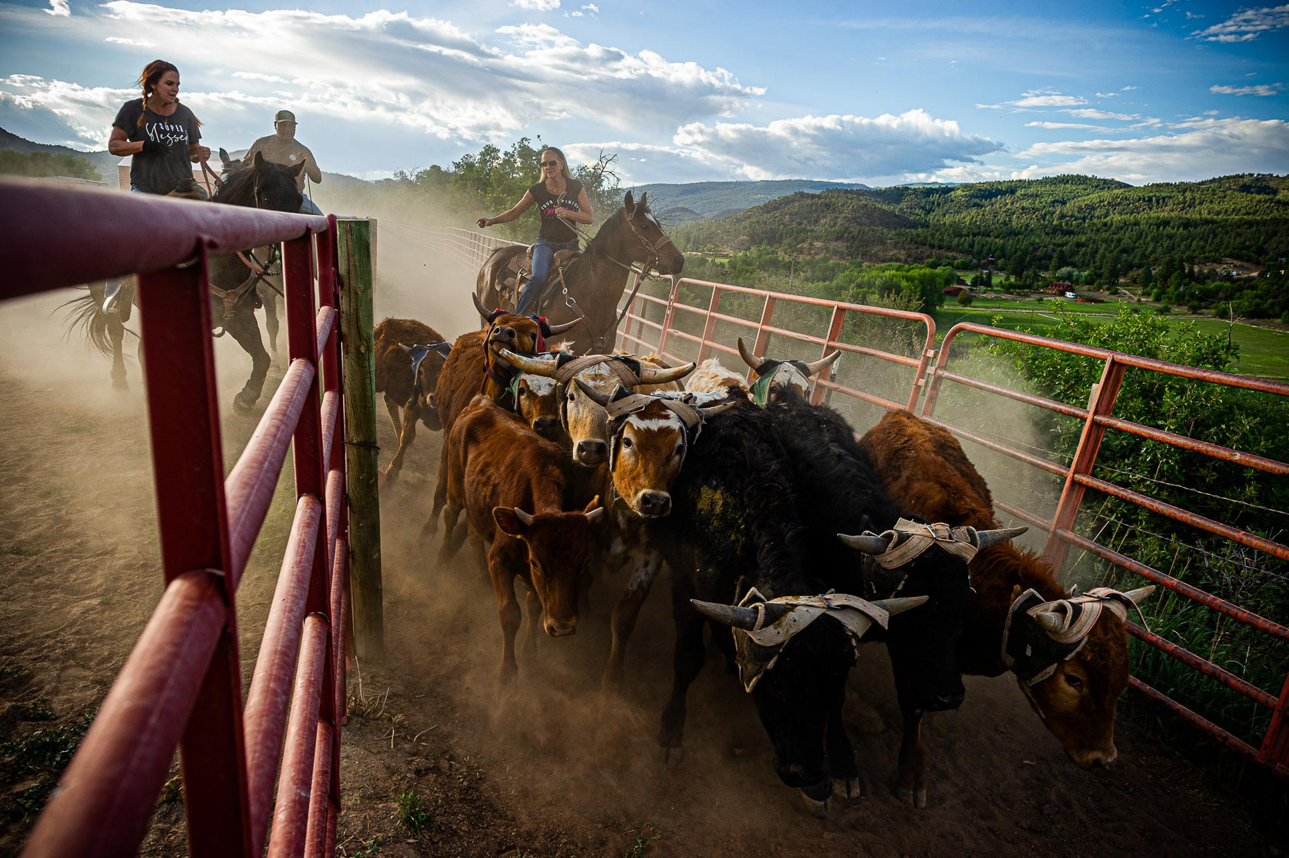 aaron-ingrao-cattle-roping-masters-arena-durango-colorado-26