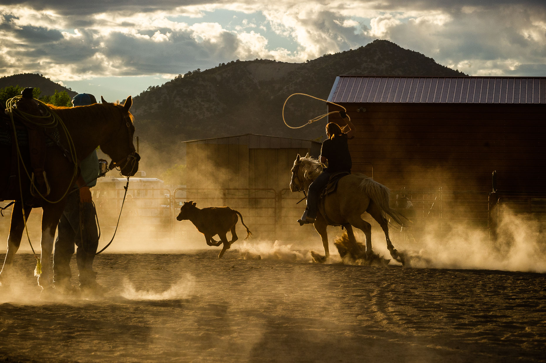 aaron-ingrao-cattle-roping-masters-arena-durango-colorado-327