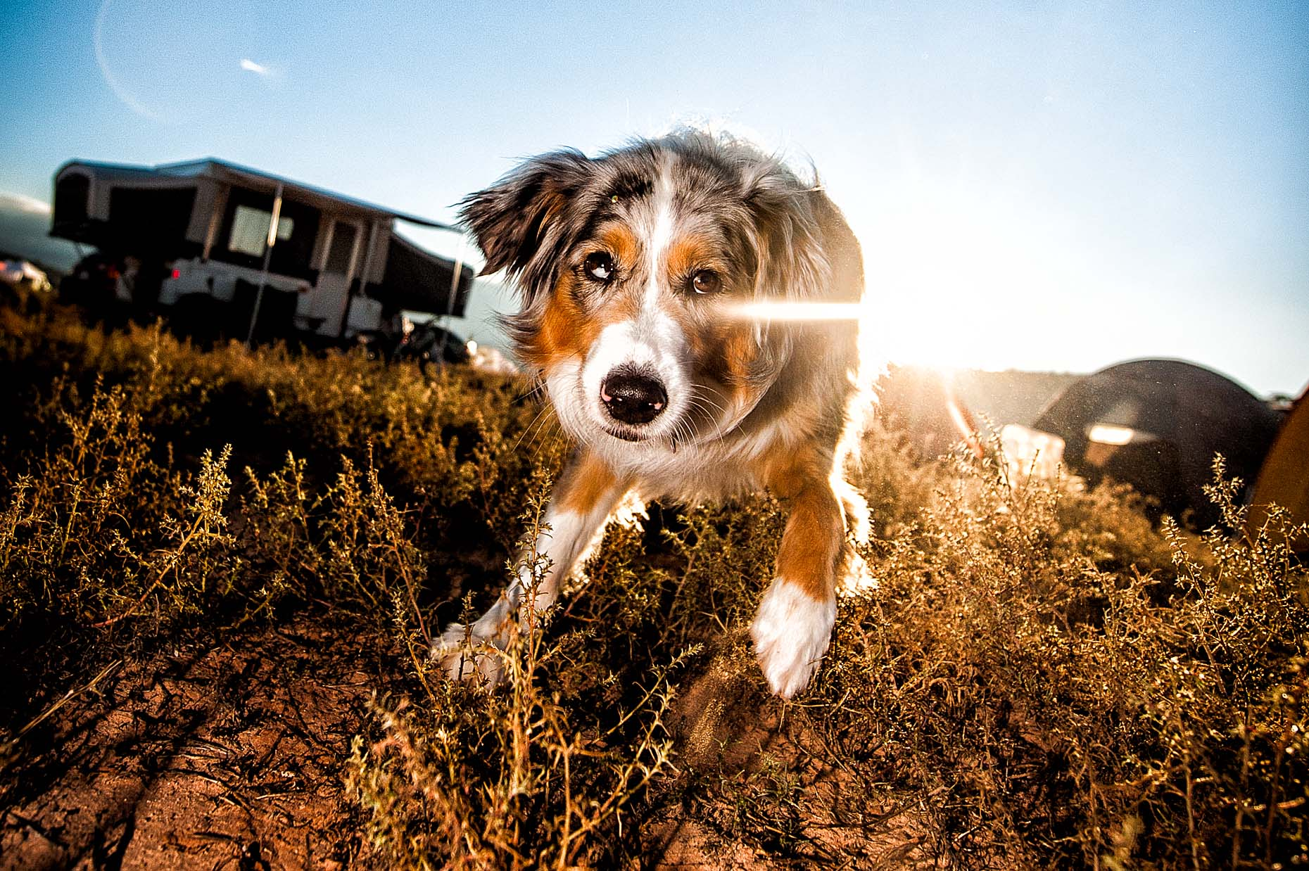 aaron-ingrao-dog-24-hours-moab-sunflair