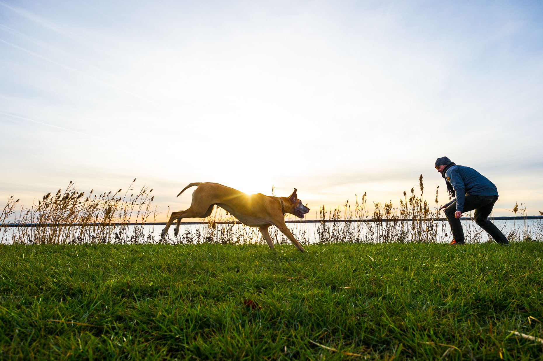 aaron-ingrao-scott-ruthie-dog-great-dane-fetch-sunset-sunflair
